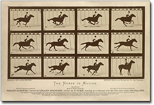 The Horse in Motion by Eadweard Muybridge 8x12 Silver Halide Photo Print