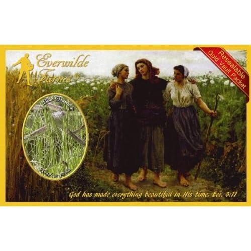 Everwilde Farms Mylar Seed Packet 1//4 Lb Blue Grama Native Grass Seeds
