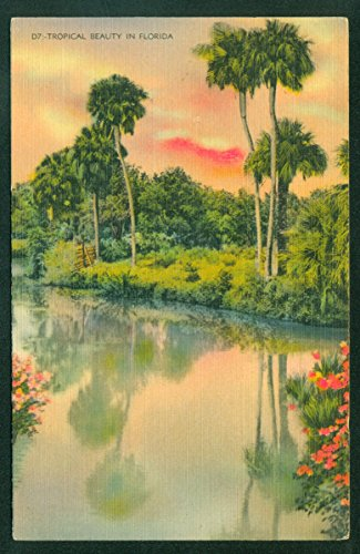 Tropical Nature Scene in Florida Palm Trees Water