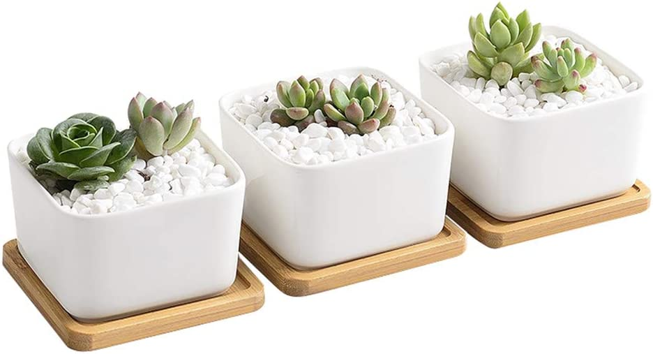 Amazon Com 3 3 Inch Succulent Plants Pot Ceramic Contemporary