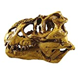 Tyrannosaurus Rex Skull Model with Stand
