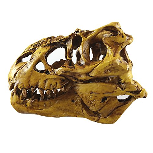 Tyrannosaurus Rex Skull Model with Stand (Tyrannosaurus Rex Skull)