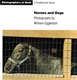 Horses and Dogs (Photographers at Work )