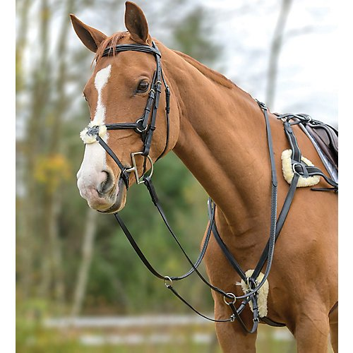 Shires Avignon 5つポイントBreastplate B07DLXV26Z B07DLXV26Z Parent ブラック ブラック Shires フル, 自転車スマートジョイ SMART JOY:ac339f23 --- m2cweb.com