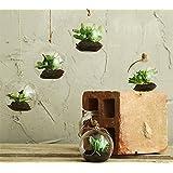 REAL TOUCH - Mini piante grasse in bolla di vetro