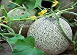 buy original package of Japan Maite melon Seeds 100 pcs Seeds per bag Green fruit seeds hami melon seeds now, new 2018-2017 bestseller, review and Photo, best price $12.87