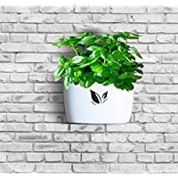 Wall Hanging Planter Pot for Herbs, Succulents - Stick On Flower Pots for Indoor Decor - no Drills, no Screws Needed…