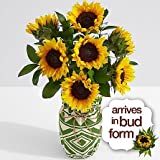 Gorgeous and Cheerful - Autumn Fall Flowers - autumn flower Arrangements - Autumn Flower Bouquets - Autumn Flower Collection - Special Autumn Flowers - Autumn Plants