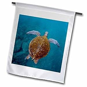 Danita Delimont–Tortugas–verde mar tortuga nadando bajo el agua, Galápagos–banderas