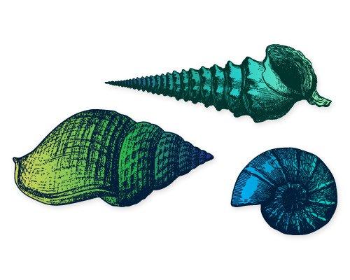 Seashells Set of 3 Natucal Ocean Sea Inspired Blue Vinyl Stickers - SELECT SIZE