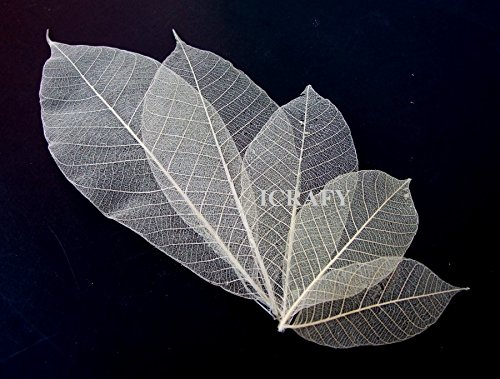 "100 Assorted Size 2"" 3"" 4"" 6"" 7"" Skeleton Natural Rubber Leaves Artificial Leaves Craft Card Scrapbook Diy Handmade Embellishment Decoration Art"