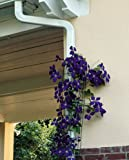 Downspout Cover Trellis offers