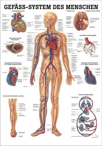 Ruediger Anatomie TA06 Gefä ß system des Menschen Tafel, 70 cm x 100 cm, Papier