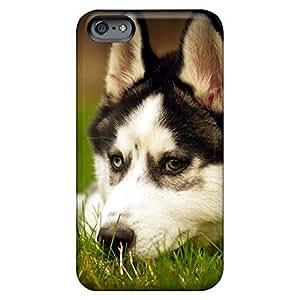 High Grade phone case skin fashion Look Ultra iphone 6 plus - husky dog resting
