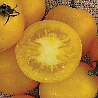 Yellow Perfection Tomato Seeds (25 Seeds) : Garden & Outdoor