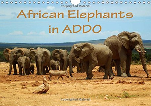 African Elephants in Addo 2017: Beautiful Photographs of Wild Elephants in the Addo National Elephant Park/South Africa. (Calvendo Animals)