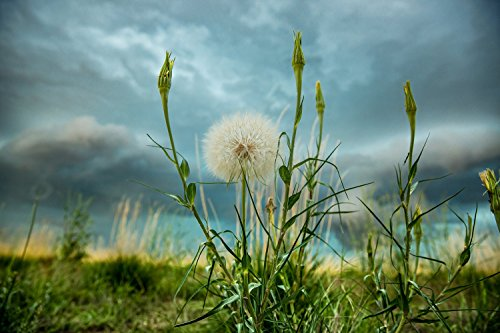 print-of-dandelion-raising-arms-in-the-air-humorous-picture-funny-decor-dandelions-photography-weath