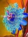 50 pcs Passion Flower Seeds (Passiflora incarnata), Rainbow Flower Plant Exotic Passion Fruit Passiflora edulis for Home garden0