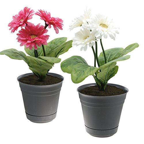 Galleon 2 Dynamic Design Self Watering 7 Planter Flower Pot