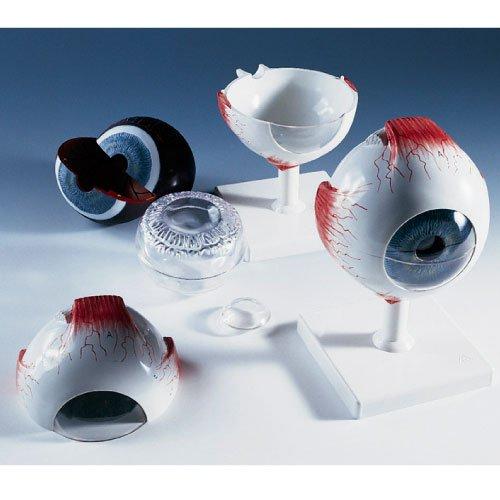 品質のいい 視覚器(眼球)6分解モデル (13X14X21CM) (11-2105-00)F10 (11-2105-00)F10 (13X14X21CM) B010AOFVN6 B010AOFVN6, ラケットショップけいすぽ:99d4ffc8 --- a0267596.xsph.ru