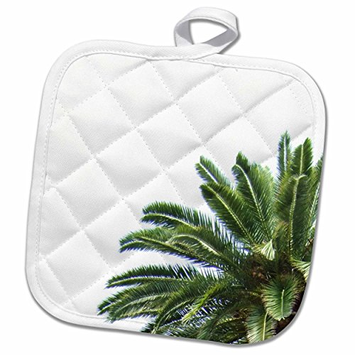 Palm Tree Pot Holder (3dRose InspirationzStore Photography - Palm tree on white sky - green leaves Mediterranean Tropical abstract - 8x8 Potholder (phl_164998_1))