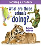 What Are These Animals Doing?, Bobbie Kalman, 0778733246