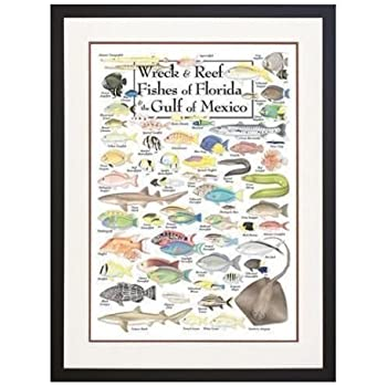 Poster - Wreck & Reef Fishes of Florida & the Gulf of Mexico