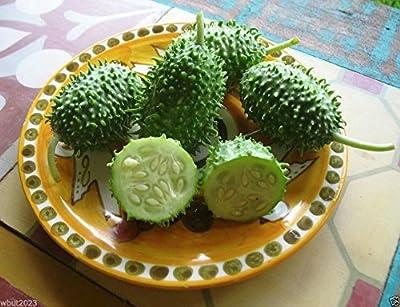 West Indian Gherkin (Cucumis Anguria) Burr Cucumber, 100~vegetable Seeds, Heirloom
