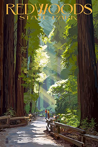 Redwoods Park, California - Pathway in Trees (16x24 Giclee Gallery Print, Wall Decor Travel Poster)