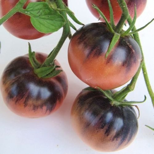 Amethyst Jewel tomato. 40+ fresh seeds for 2018 (Mixer Composter)