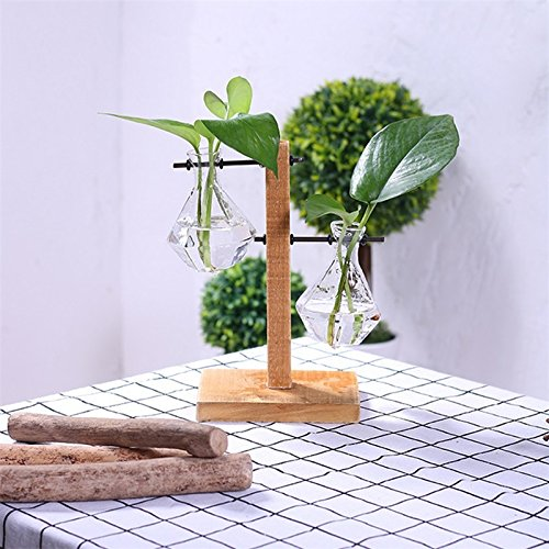Creative Transparent Water Planting Glass Vase with Wooden Stand Desktop Decoration Flowerpot Gift