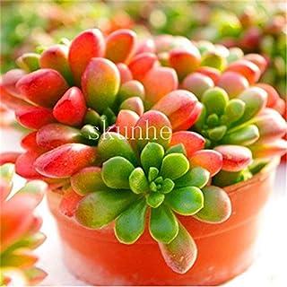 Pinkdose 100 piezas Mezcla Lithops bonsai Piedras vivas Flor de cactus suculenta Planta orgánica Huerto casero: 11
