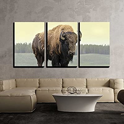 Bison in Grasslands of Yellowstone National Park in Wyoming x3 Panels
