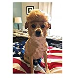 Trump Style Dog Wig Pet Costume, Donald Cat Wig Head Wear for Halloween, Christmas, Parties, Festivals by FMJI