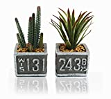 Q me I Love Succulents 2 Artificial Potted Green Plants: Lifelike Looking Leaves 2 Natural Evergreens in Sign Pots Home Work Décor Gift