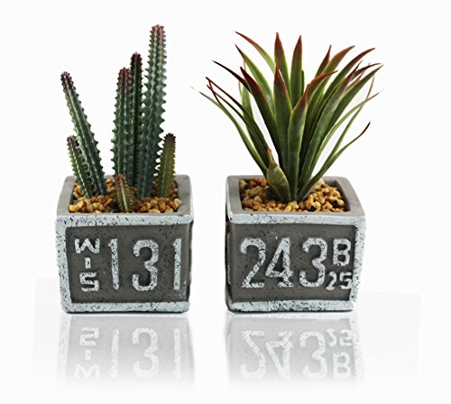 Mini Boxed Arrangement - Q me I Love Succulents 2 Artificial Potted Green Plants: Lifelike Looking Leaves 2 Natural Evergreens in Sign Pots Home Work Décor Gift