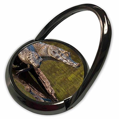 Caiman Pedestals - 3dRose Danita Delimont - Reptiles - Brazil, Cuiaba River, Pantanal Wetlands, Three Yacare Caiman. - Phone Ring (phr_258385_1)