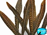"Pheasant Feathers, 6-8"" Golden Pheasant Tail Feathers, 10 Pieces"