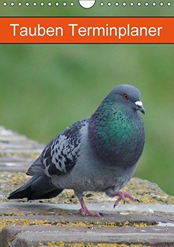 Tauben Terminplaner (Wandkalender 2016 DIN A4 hoch): Echte Schönheiten (Planer, 14 Seiten ) (CALVENDO Tiere)