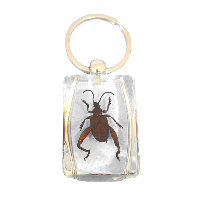 Amazon.com: Claro Lucite Encanto Llavero w/joya Rana Beetle ...
