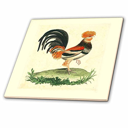 - 3dRose ct_62339_4 1770 French Vintage Rooster Print Ceramic Tile, 12-Inch