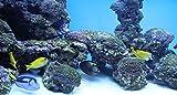 Home Comforts Laminated Poster Deco Dori Fish Aquarium Nemo Salt Water Poster Print 24 x 36