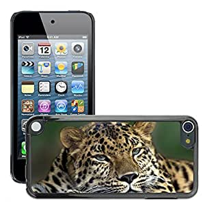 Hot Style Cell Phone PC Hard Case Cover // M00047309 leopard resting animals wild // Apple iPod Touch 5 5G 5th