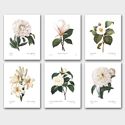 Set of 6 Botanical Prints, Redoute Art (White Flower Room Decor) Camellia Peony Magnolia – Unframed
