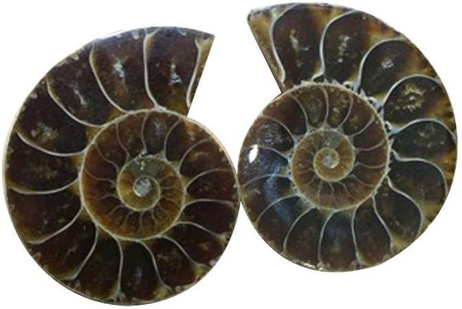 JUGSY 1pair Madagascar Sea Natural Druzy Ammonite Slice Shell Gemstone Specimen