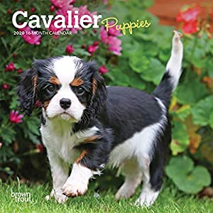 Cavalier King Charles Spaniel Puppies 2020 7 x 7 Inch Monthly Mini Wall Calendar, Animals Dog Breeds Puppies 2