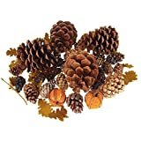 Homeford Dried Scented Pine Cones Natural Forms with Mini Pumpkins, 40-Piece