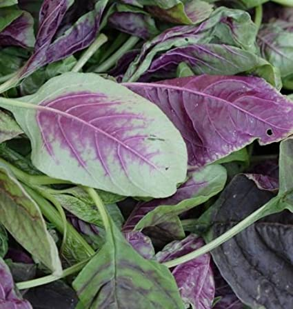 Amaranth Asian Red Spinach 5500 Organic  Non-Gmo Seed..Combined Shipping