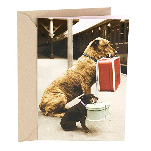 Shoe Box Cards - Hallmark Shoebox Funny Greeting Card for Friend (Traveling Dogs)