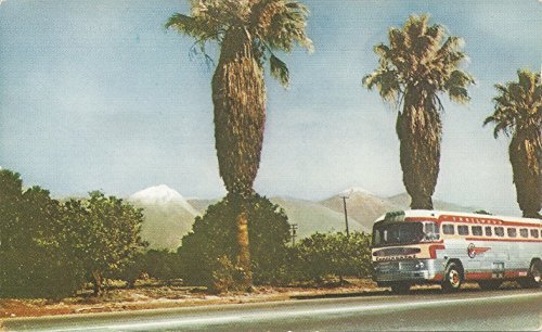 - Southern California's mount Baldy, Continental Trailways Bus, Early Picture Postcard, Unused